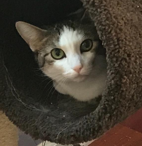 cat in cat tower