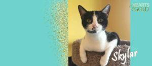 Cat on Cat Tree with name Skylar